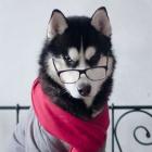 Profil de Alvin_Stick