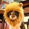 Liongear