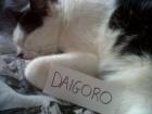 Profil de Daigoro