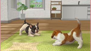Des infos sur Nintendogs+Cats