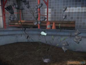 Solution complète : Affaire 2 : Jardin secret