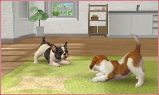Les races de chien disponibles dans Nintendogs + Cats