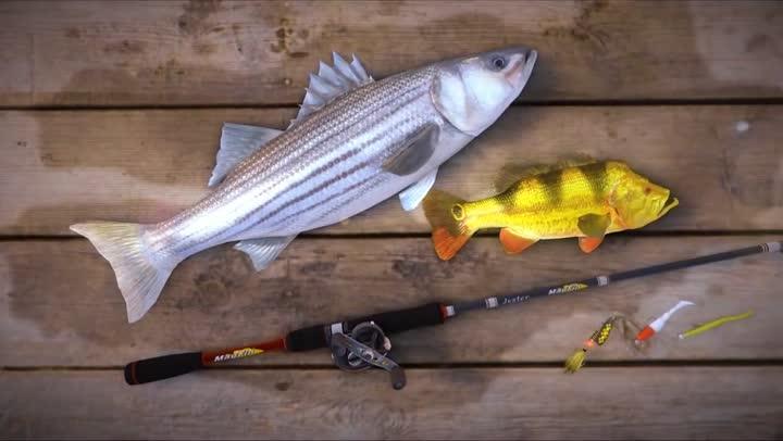 Bande annonce fishing planet bienvenue dans le monde du for Fishing planet ps4