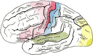 Le jeu vidéo combat le vieillissement du cerveau.