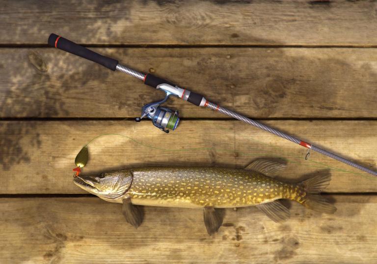 Tout pour le bois et la pêche le plus simple et bon marché