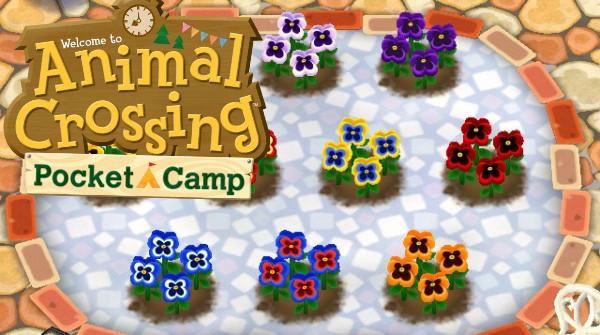 Animal Crossing Pocket Camp, guide jardinage : tous les croisements de fleurs possibles, et leurs résultats