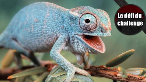 Le Défi du Challenge : Les reptiles sont nos amis