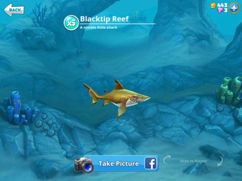 Requins XS