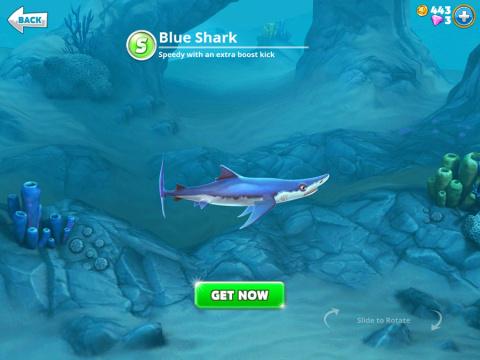 Requins S