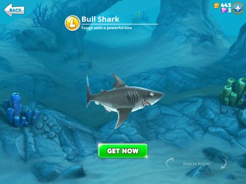 Requins L