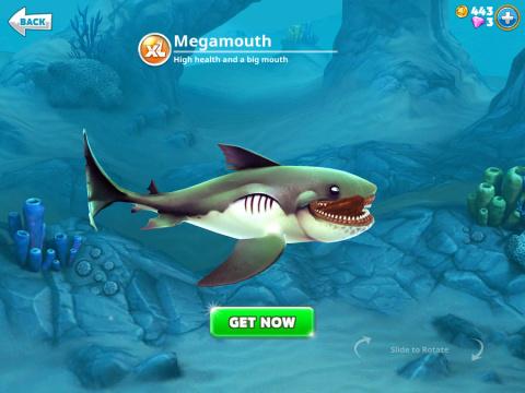 Requins XL