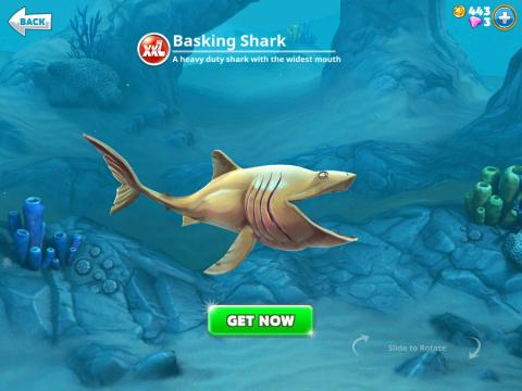 Requins XXL
