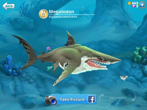 Requins !!