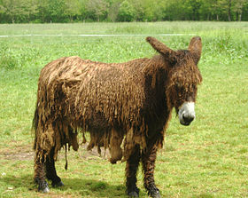 Harvest Moon : Skytree Village annoncé... Avec un âne du Poitou
