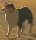 Les chiens renifleurs