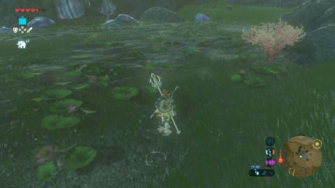 Pluie de grenouilles
