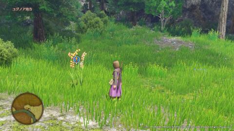 012 : A la recherche d'une plante rare