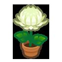 Tout savoir sur la reproduction des chrysanthèmes